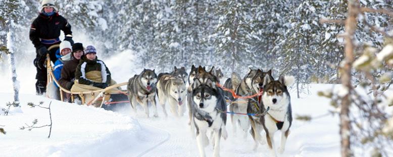 Husky Kızakları - Finlandiya