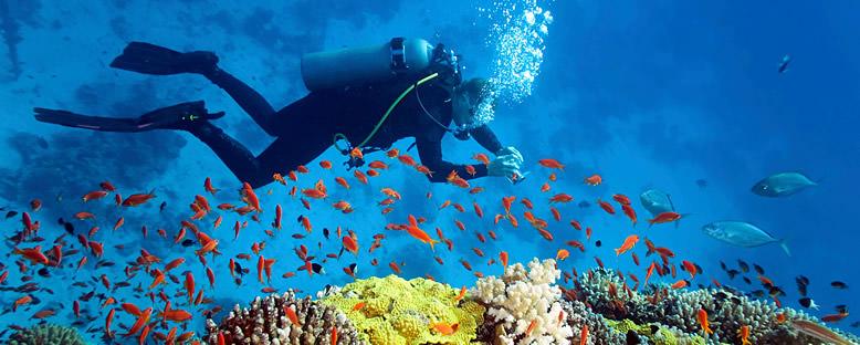 Su Altı Zenginlikleri - Bahamalar
