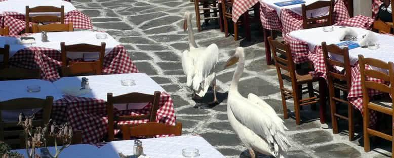 Adanın Maskotu Pelikanlar - Mykonos