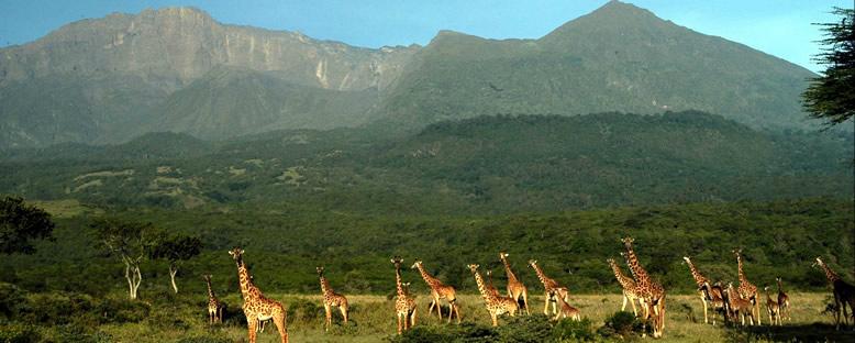 Arusha Bölgesi - Kilimanjaro