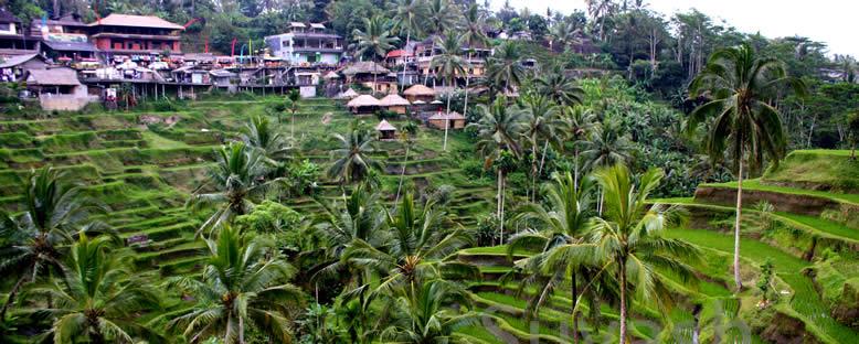 Pirinç Tarlaları - Bali