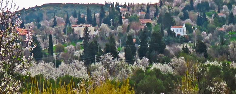 Bdem Ağaçları ve Köyler - Datça