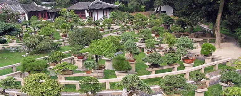 Bonsai Bahçeleri - Suzhou