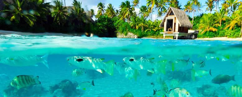 Bora Bora'da Su Altı - Fransız Polinezyası