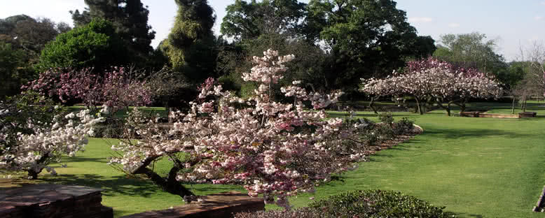Botanik Bahçesi - Johannesburg