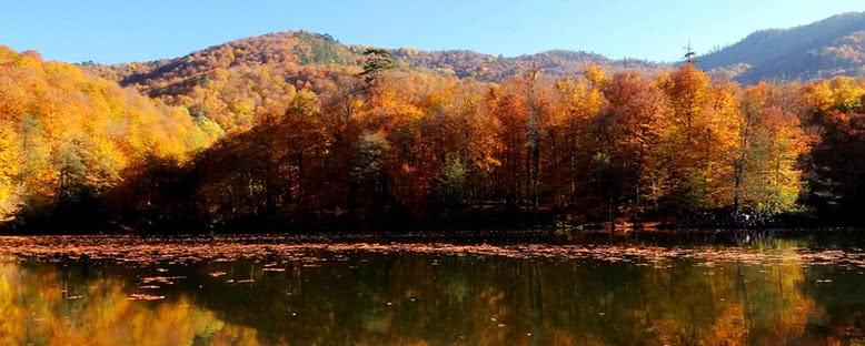 Çam Ormanları - Yedigöller
