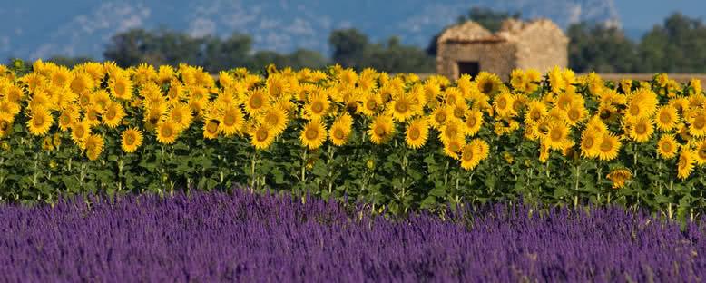 Çiçek Tarlaları - Aix En Provence