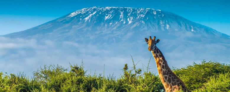 Dağ Manzarası - Kilimanjaro