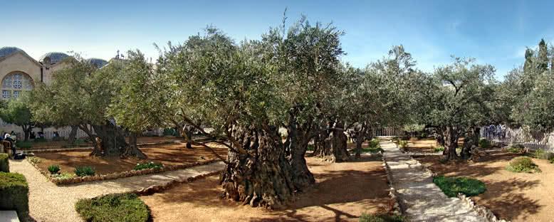 Gethsemane Bahçesi - Kudüs