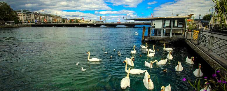 Göl ve Kuğular - Cenevre