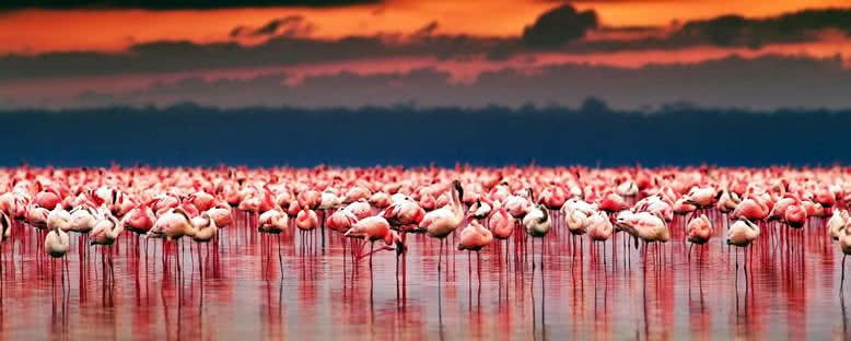Gün Batımı - Nakuru Gölü
