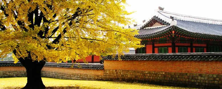 Gyeongbokgung Sarayı'nda Sonbahar - Seul