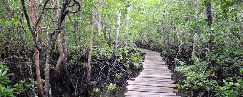 Jozani Ormanı - Zanzibar