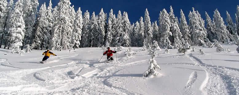 Kayakçılar - Poiana Brasov