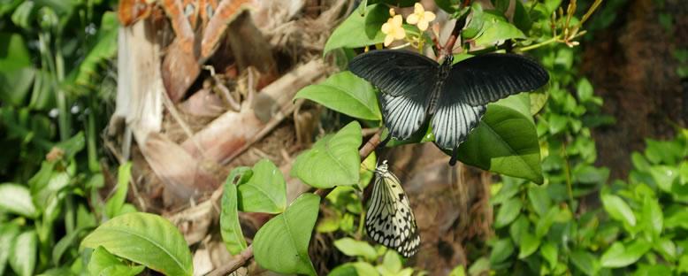 Kelebek Cinsleri - Konya Tropikal Kelebek Bahçesi