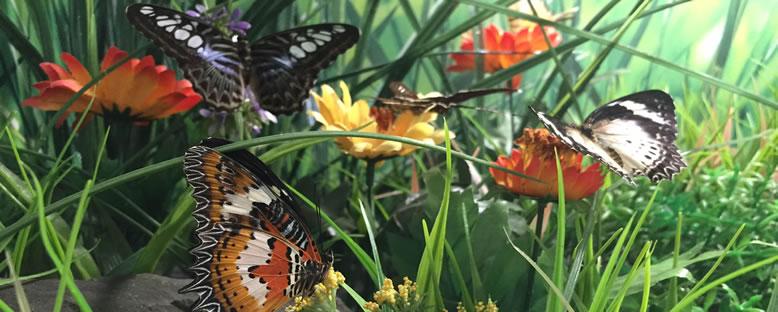 Kelebek Türleri - Konya Tropikal Kelebek Bahçesi