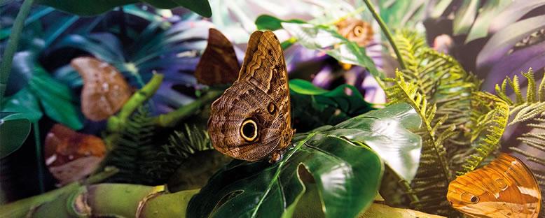 Kelebekler - Konya Tropikal Kelebek Bahçesi