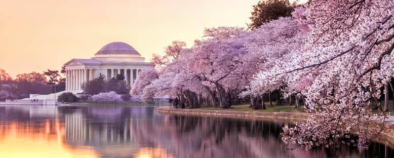Kiraz Ağaçları ve Jefferson Anıtı - Washington D.C.