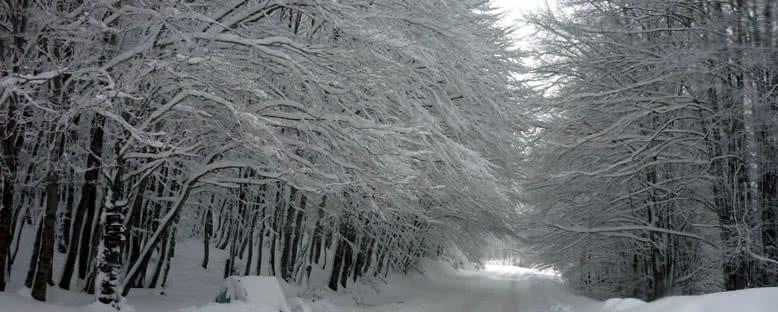 Kış Aylarında Ulusal Park - Mavrovo