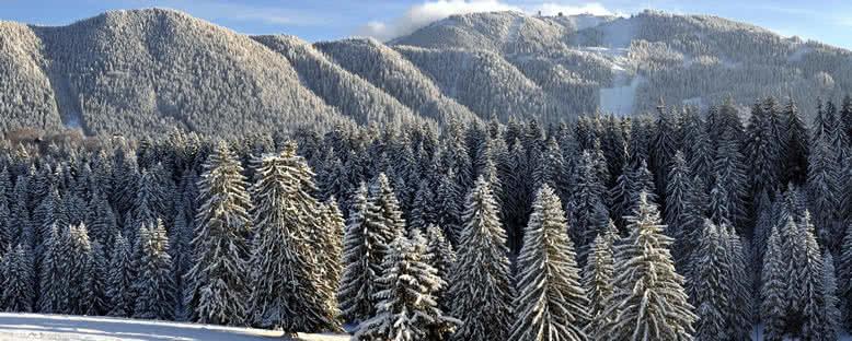 Kış Manzarası - Poiana Brasov