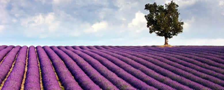 Lavanta Tarlası - Aix en Provence