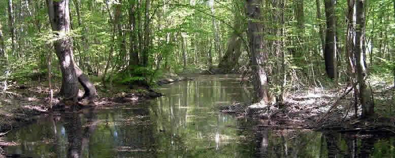 Longoz Ormanlarında Bahar - İğneada