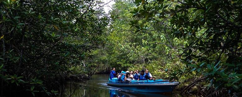 Mangrov Ormanı - Bintan