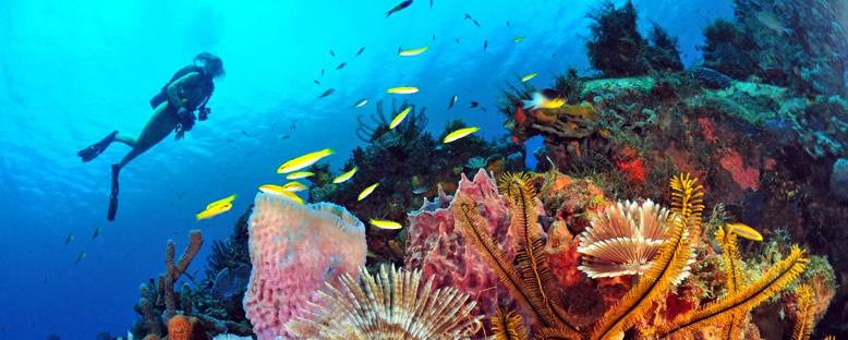 Martinique'de Dalış Keyfi - Antiller