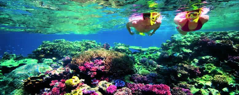 Mercanlarda Dalış - Seyşeller
