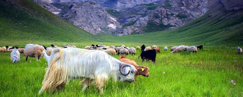 Meydan Yaylası'nda Bahar - Bolkar Dağları