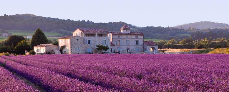 Lavanta Tarlaları - Aix En Provence