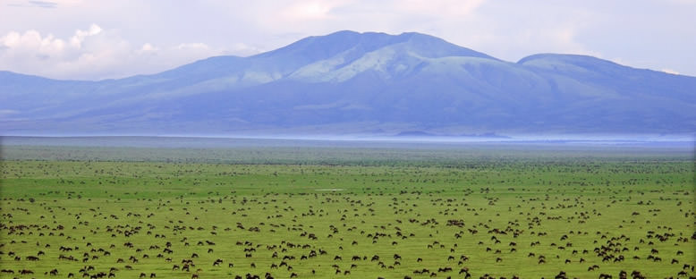 Serengeti Düzlükleri - Tanzanya
