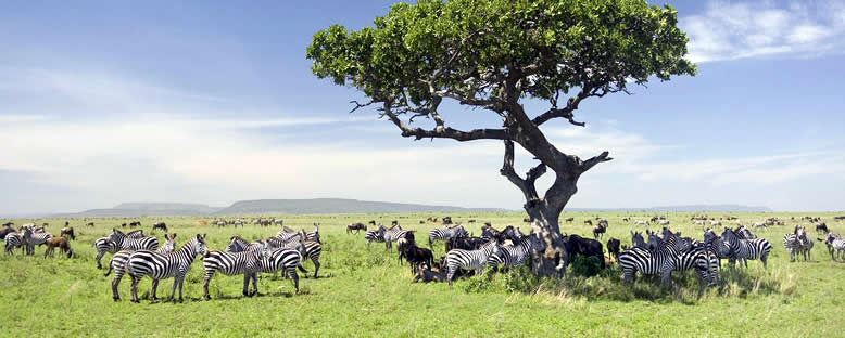 Serengeti Sakinleri - Tanzanya