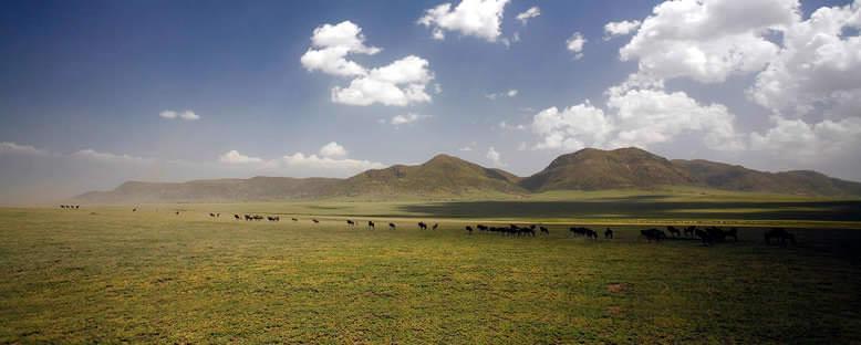 Serengeti'de Göç - Tanzanya