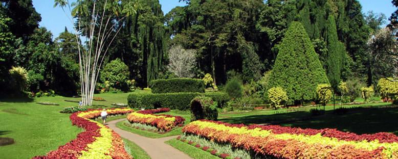Kraliyet Botanik Bahçesi - Kandy