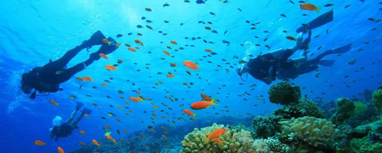 Su Alti Güzellikleri - Punta Cana