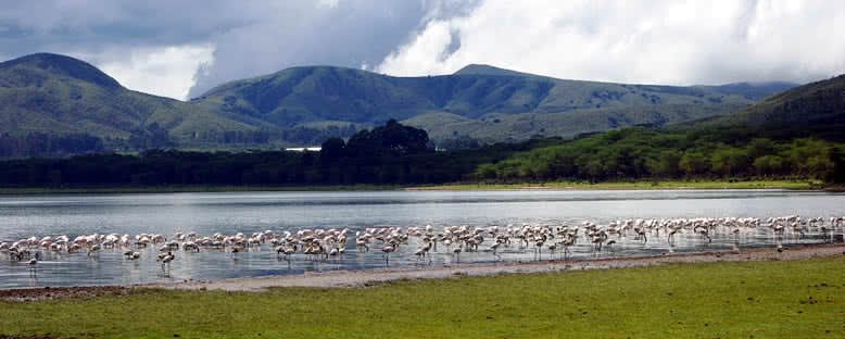 Su Kuşları - Naivasha Gölü