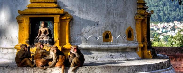Swayambunath Tapınağı Maymunları - Katmandu