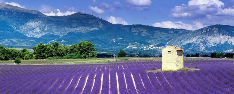 Tarlalar - Aix-En-Provence
