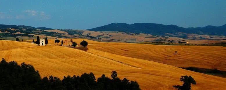 Tarlalar ve Bağlar - Toskana