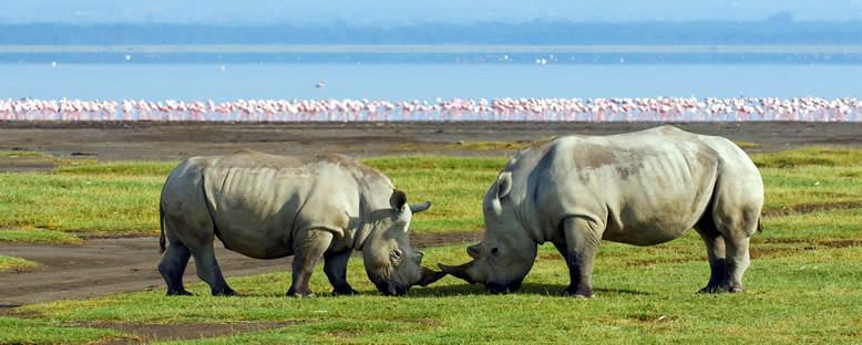 Ulusal Park - Nakuru Gölü