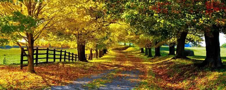 Yürüyüş Yolları - Yedigöller